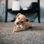 маленькая собачка на ковролине