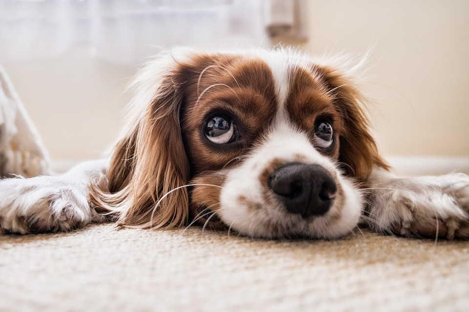собачий добрый взгляд